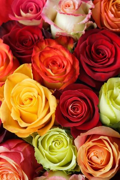 blumenstrauss aus rosen