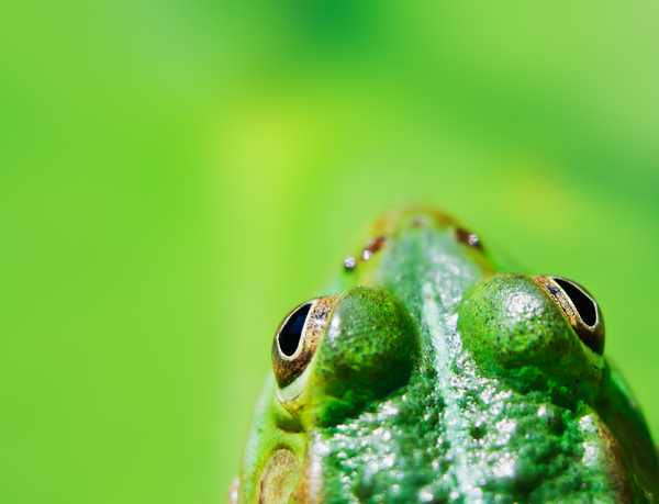 frog portrait from above