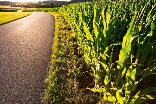 landstrasse durch maisfeld