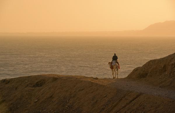 lonly rider