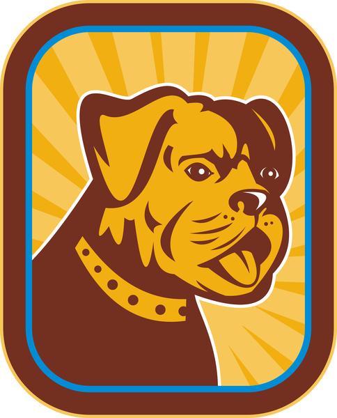 bulldog und boston terrier hybrid