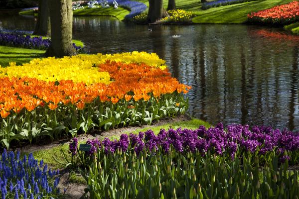 tulpen hintergrund
