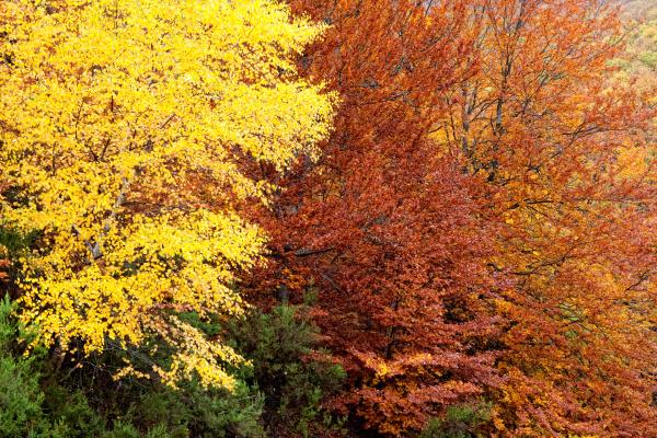 baum park saison jahreszeit orangefarben orange