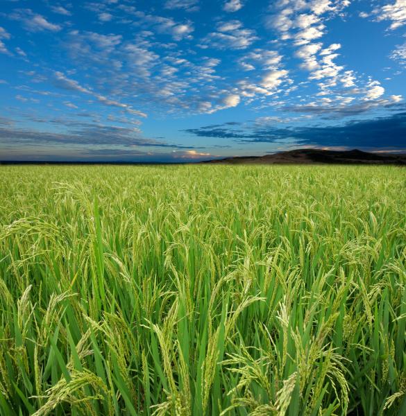 blau essen nahrungsmittel lebensmittel nahrung landwirtschaft