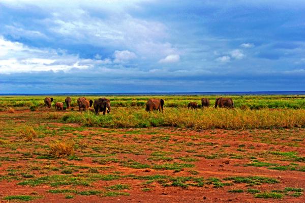 elefant vor kilimandscharo