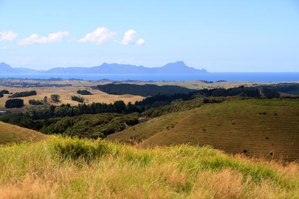neuseeland landschaft auf der nordinsel