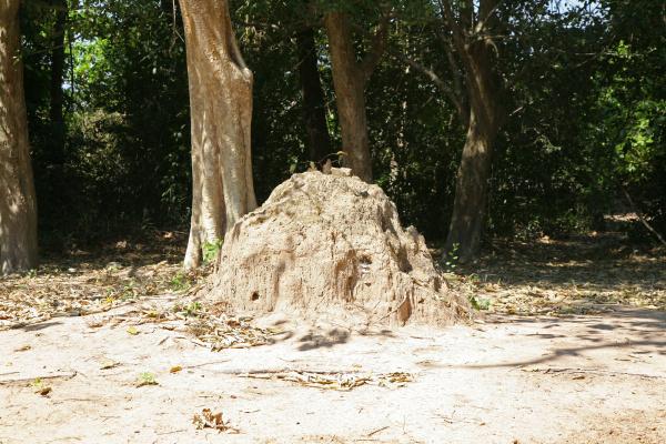 termitenhuegel