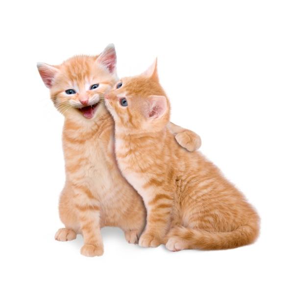 zwei verliebte katzen