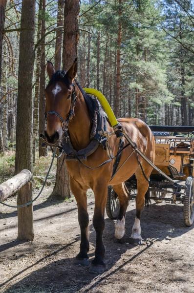 transport transportieren outdoor freiluft freiluftaktivitaet im