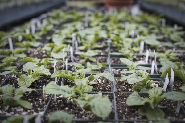 fruehling wachstum in einem organischen pflanzengaertnerei