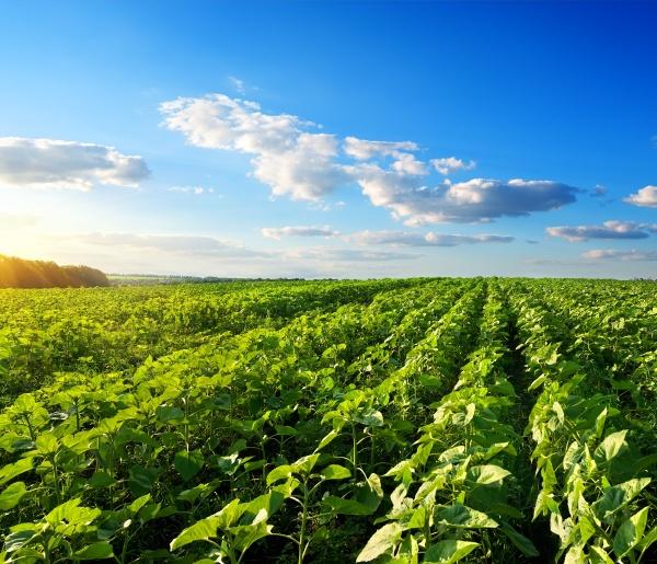 blau horizont sonnenuntergang landwirtschaft ackerbau wolke
