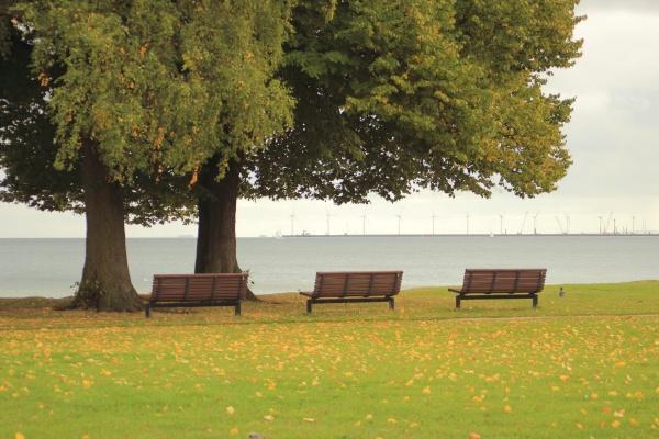 drei, bänke, in, einem, park, mit - 11963808