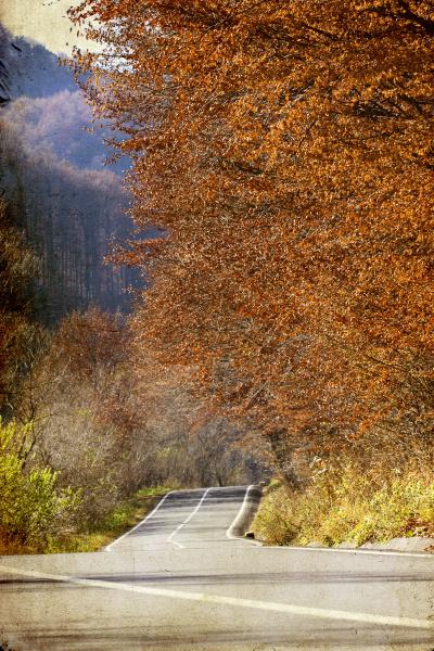 blatt baumblatt closeup baum herbstlich outdoor