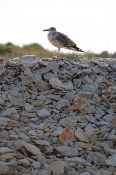 vogel moewe strand stein felsen felsig