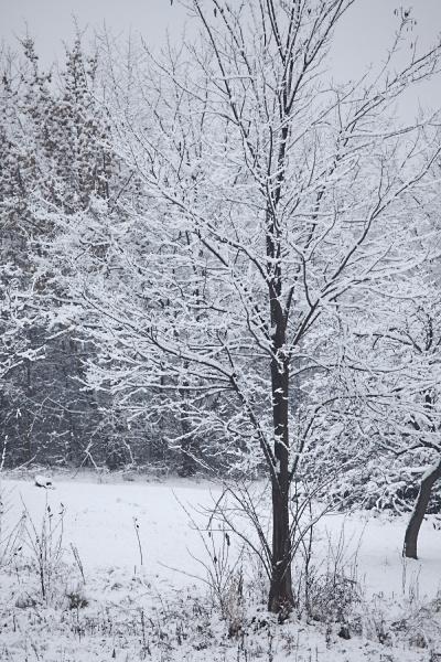 winter baum mit schnee