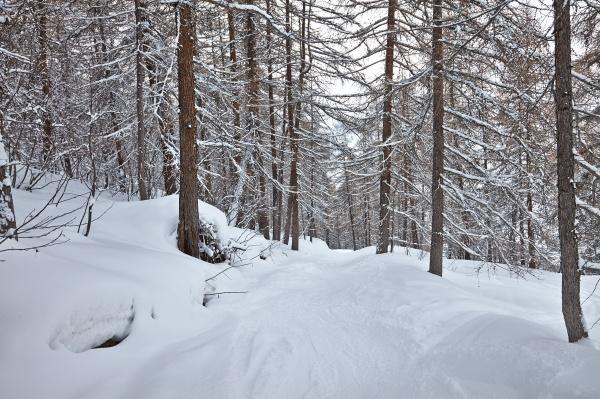 winterweg mit schnee