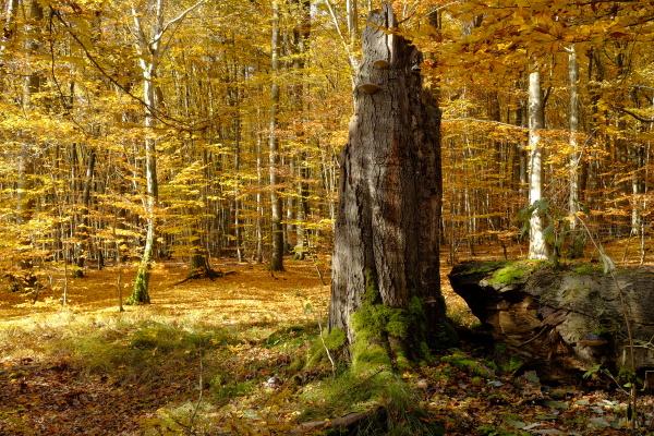 herbst im noerdlichen steigerwald unterfranken