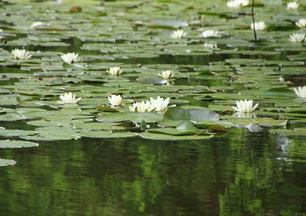 park blume pflanze gewaechs blaetter sommer