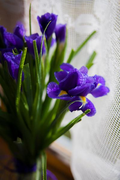 blumenstrauss iris
