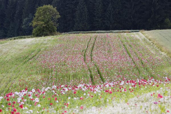 farbe blume pflanze gewaechs landwirtschaft ackerbau