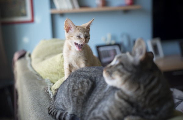 zwei katzen auf der rueckenlehne der