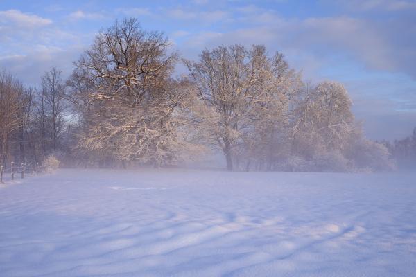 deutschland gelting winterlandschaft im morgenlicht