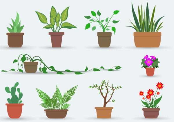 hauspflanzen