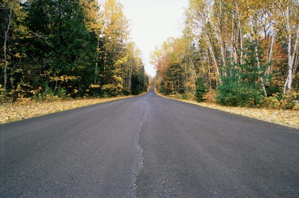 blatt baumblatt fahrt reisen baum asphalt