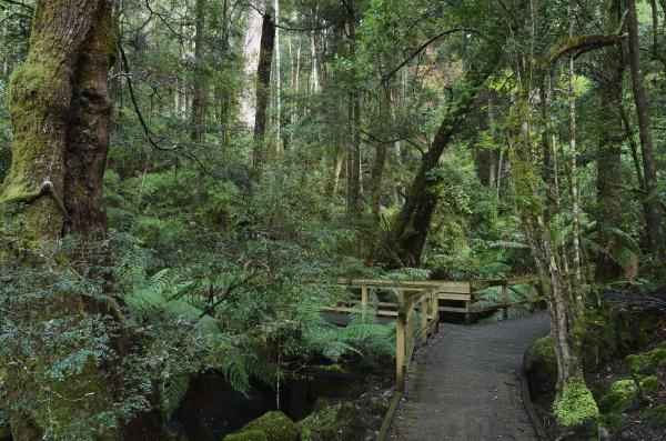 spaziergang durch gemaessigten regenwald mount field