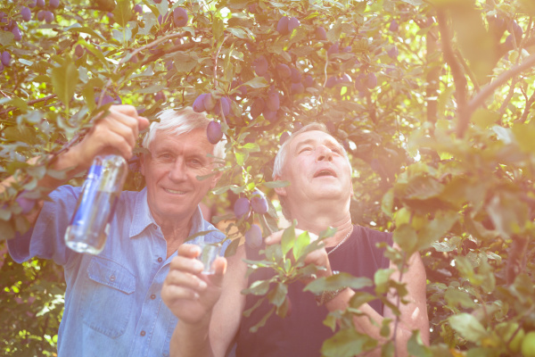 aufgeregte senioren mit alkohol unter dem