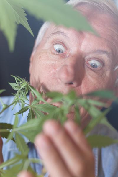 UEberraschter senior mit cannabispflanze