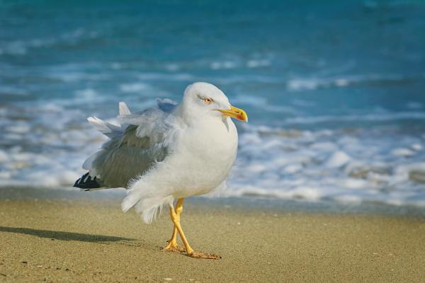 seagull wandern durch den strand