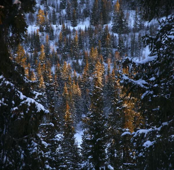 fahrt reisen baum winter norwegen outdoor