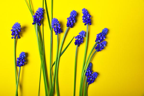 blume pflanze gewaechs fruehjahr dekoration ausschmueckung