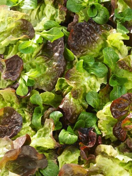 eichenblattsalat und lammsalat