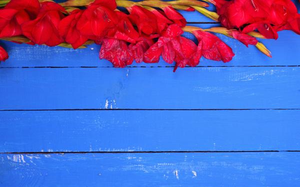 blau farbe holz bluete erbluehen bluehen