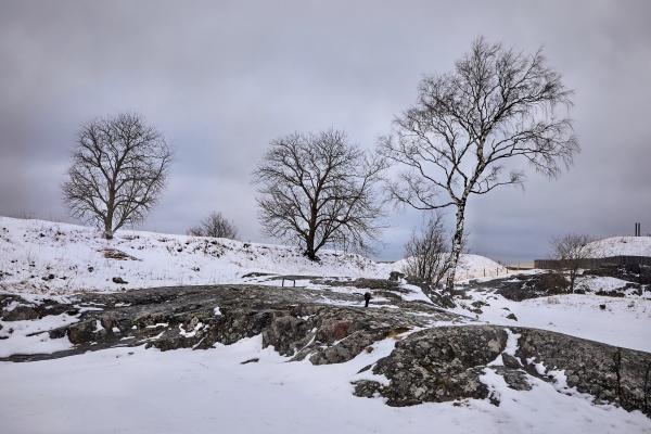 winter park landscape