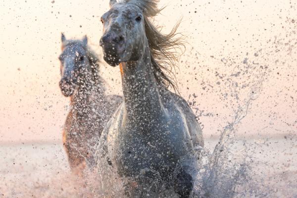 fahrt reisen pferd ross tier strand