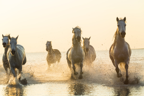 fahrt reisen pferd ross tier freiheit