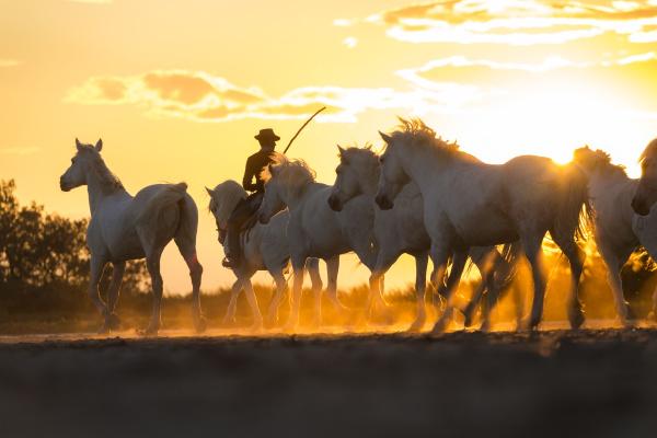fahrt reisen pferd ross tier sonnenuntergang