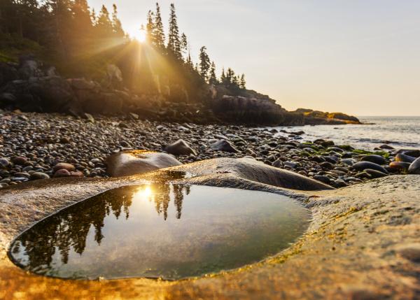 baum strand sonnenaufgang wellen reflexion usa