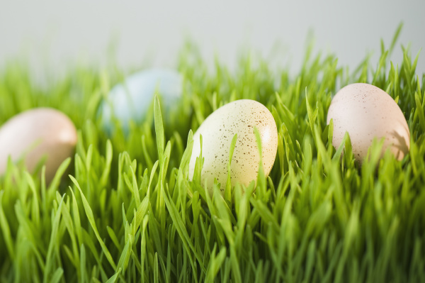 verzierte eier im gras