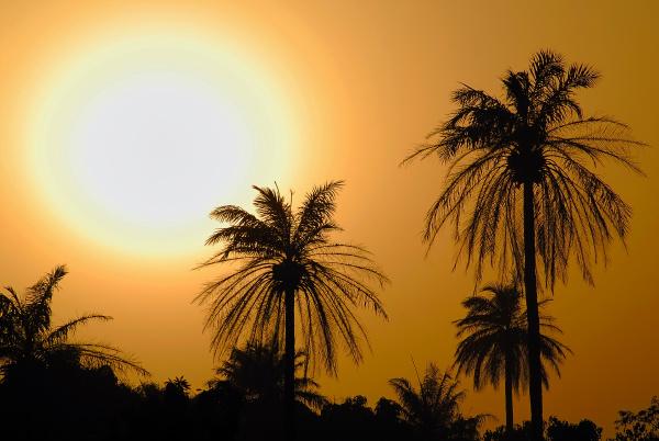 sonnenuntergang vor palmen the gambia