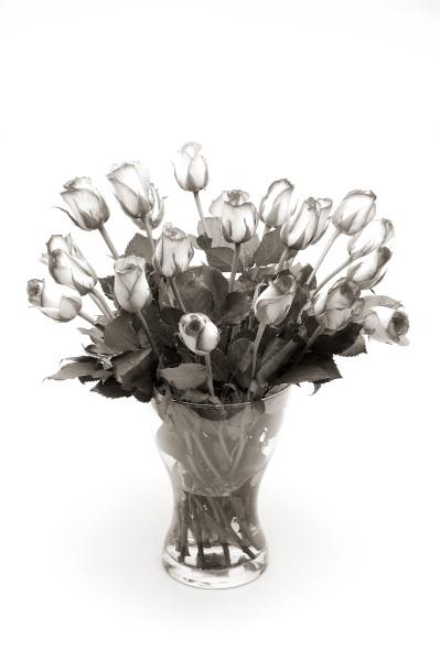 rosenstrauss in vase