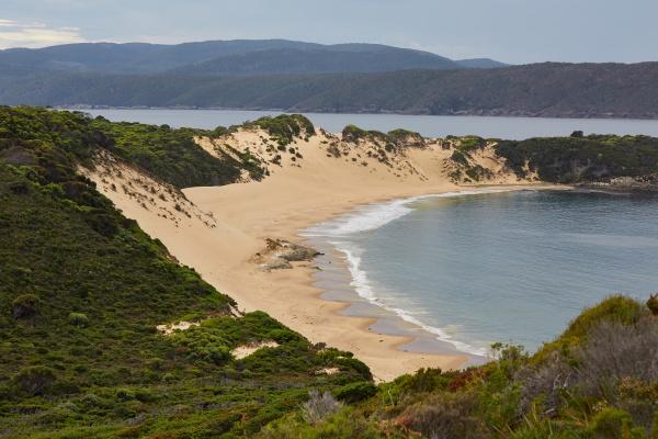 fern sandy beach