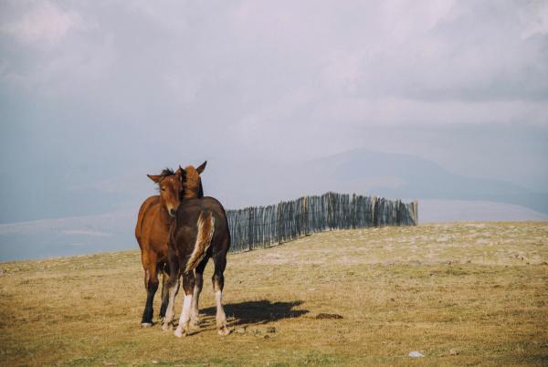 umwelt tiere feld sonnenlicht pferd ross