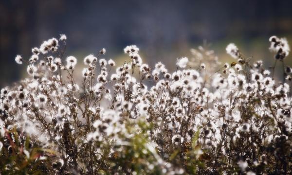 umwelt landwirtschaft ackerbau feld blume blumen