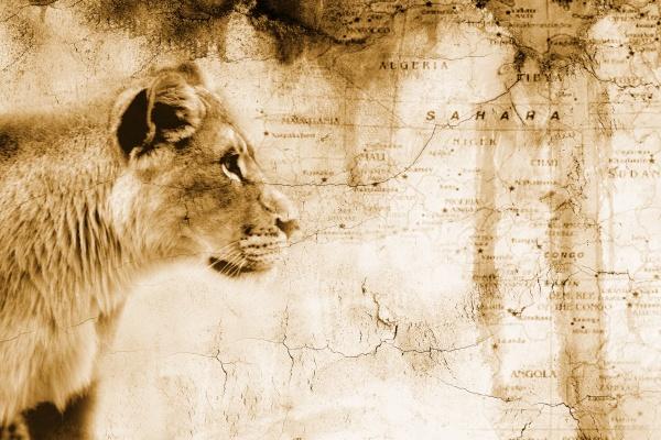profil fahrt reisen tier afrika loewe