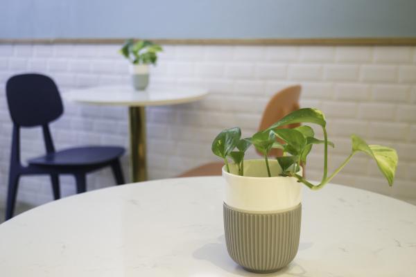 cafe innenraum dekor saubermachen saeubern abputzen
