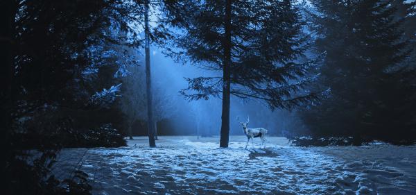 magische winterszene im wald mit einem
